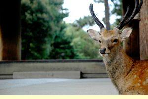 奈良の鹿写真